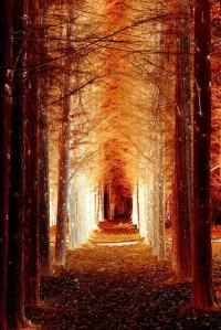 Pathways' Glory / Magical Avenue. By Gaz
