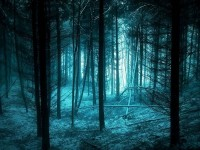 Photography / Beautiful Forest Photography — Designspiration