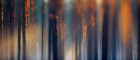 Photography   Visual Inspiration / Photography by Sandra Bartocha. A foggy forest captured in the evening glow of the sun.
