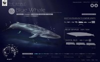 The whale on