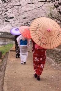 This... I will see myself! / #cherry blossom sakura #Japan wagasa