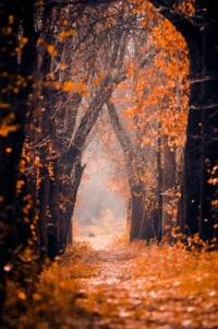 ??T??N?L ? ?Q?IN?? / Piccsy :: Image Bookmarking :: orange road to home