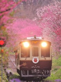 Traveling in Style / Watarase line running through Tochigi, Japan