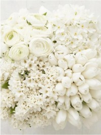 Whiteout / Gorgeous White Flowers: Ranunculus, Hydrangea, Tulips, Hyacinth #WeddingFlowers http://pinterest.com/ahaishopping/