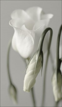 Whiteout / Simple beauty is simply beautiful.