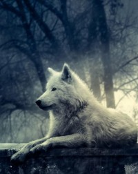 Who's Afraid Of The Big Bad Wolf? / Night of the Wolf by =lady-amarillis
