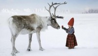 winter / gnome with caribou