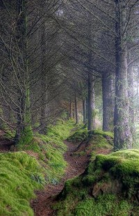 YON BONNIE HEILAND HEART / On the path to King's Cave, Isle of Arran, Scotland.